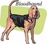 Bloodhound 04