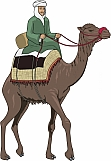 Arab Riding Camel 01