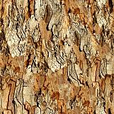 Tree Bark 16
