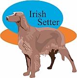 Irish Setter 01