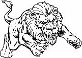 Lion 05
