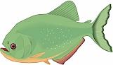 Piranha 01