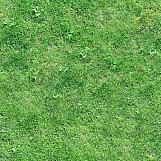 Grass 37