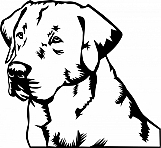 Labrador Retriever 001