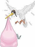 Stork 01