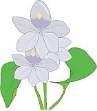 Hyacinth 03