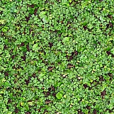 Ground Cover 09