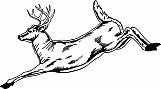 Deer 04