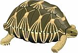 Tortoise 01
