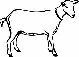 Goat 01