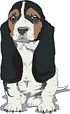 Basset Hound 04