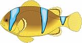 Clown Fish 02