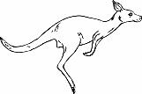 Kangaroo 02