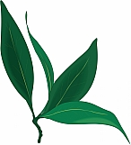 Bay Leaves 01