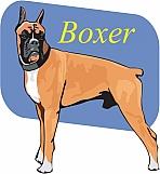 Boxer 03