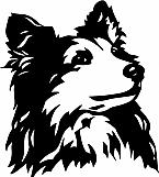 Shetland Sheepdog 02