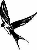 Swallow 01