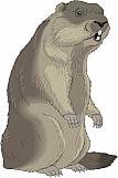 Marmot 01