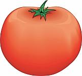Tomato 02