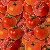 Tomatoes 02