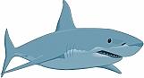 Shark 06