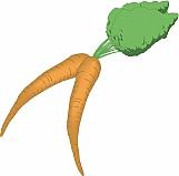 Carrots 01