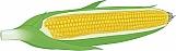 Corn on the Cob 01