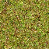 Ground Cover 10