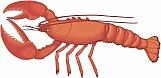 Lobster 02