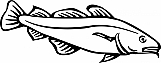 Codfish 01