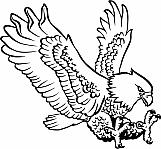 Eagle 17