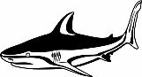 Shark 04