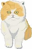 Cat 08