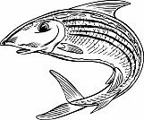 Bonefish Jumping 01