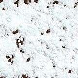 Snow 06