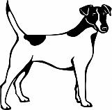 Fox Terrier 01