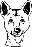 Dingo 01