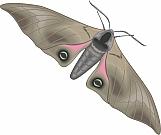 Moth 03