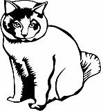 Cat 04