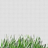 Grass 15