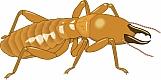 Termite 01