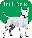 Bull Terrier 03