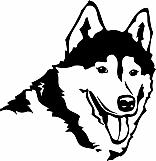 Siberian Husky 02
