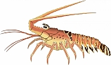 Lobster 03