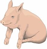 Pig 04