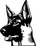 German Shepherd 03