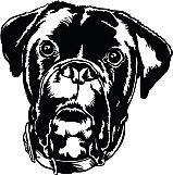 Boxer Bulldog Mix 01