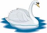 Swan 03