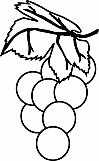 Grapes 02