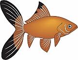 Goldfish 01